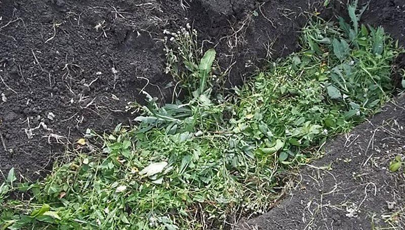 яма в почве